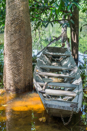 wooden boat: Wooden boat at river shore in Amazon River