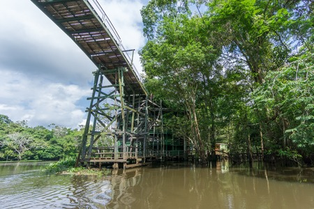 amazon forest: Amazon forest and wooden bridge built for anaconda film Stock Photo