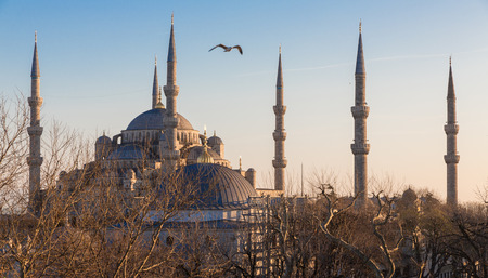 blue mosque: Blue mosque and seagull at sunset, Istanbul, Turkey