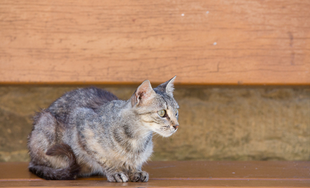 wooden bench: Tabby Cat standing over wooden bench Stock Photo