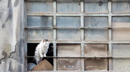 abandoned warehouse: Abandoned cat over warehouse broken window