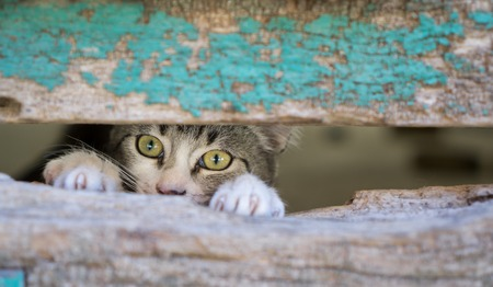 Front view of kitty through old wooden door hole Stockfoto