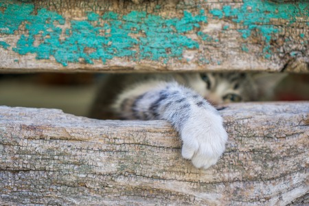 old wooden door: Front view of kitty leg through old wooden door hole Stock Photo