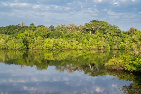amazon forest: Panoramic view of amazon forest skyline and black river