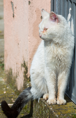 carelessness: Closeup of white cat head with sick eyes