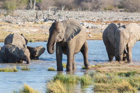 waterhole: Mam� y beb� elefantes que consiguen en charca de Etosha Foto de archivo