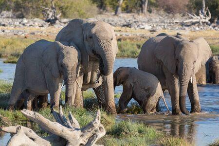 pozo de agua: Mamá y bebé elefantes que consiguen en charca de Etosha Foto de archivo