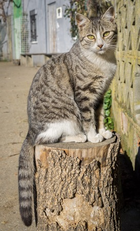 front view: front view of cat standing on log
