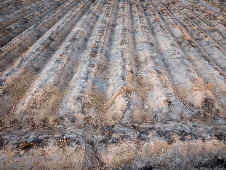 furrows: Preparing field for next farming with burnt furrows, top view Stock Photo