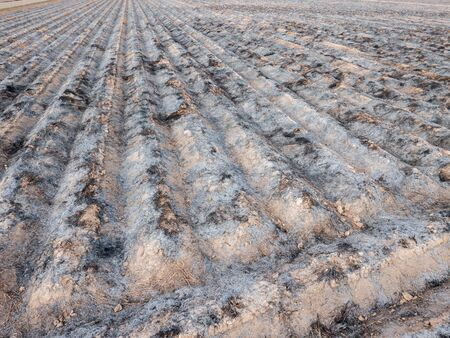 furrows: Preparing field for next farming with burnt furrows Stock Photo