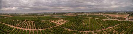 valencia orange: Wide angle aerial view panrama of orange fields in Valencia Stock Photo