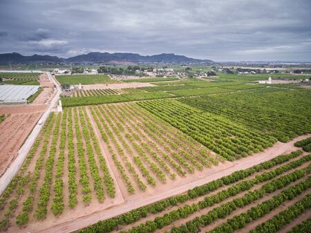 valencia orange: Wide angle aerial view of orange fields with stormy clouds in Valencia Stock Photo