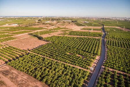 valencia orange: Wide angle aerial view of orange fields at dusk in Valencia