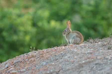plan éloigné: Frappe de lapin au bord Banque d'images
