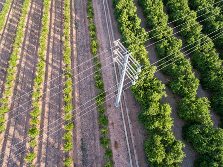 electrical tower: Top view of electrical tower over orange tree field