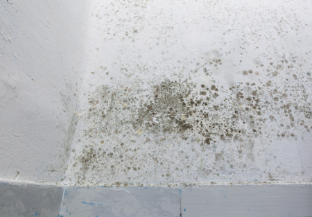 Damp patches on a wall over baseboard