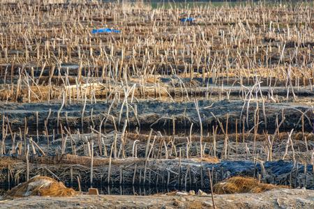 Closeup of saltmine ponds Stock Photo