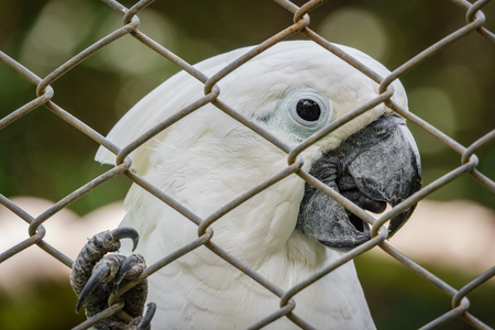 White parrot behind grille