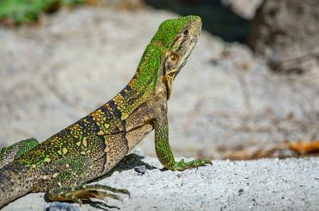 Rear view of green lizard