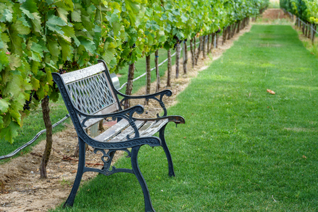 vanishing point: Bench in vineyard
