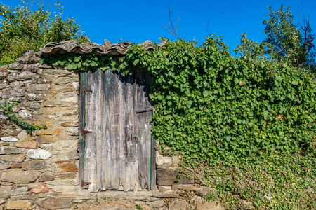 Vintage wooden door over stone wall with ivy