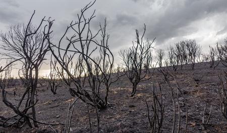 Devastated burnt forest