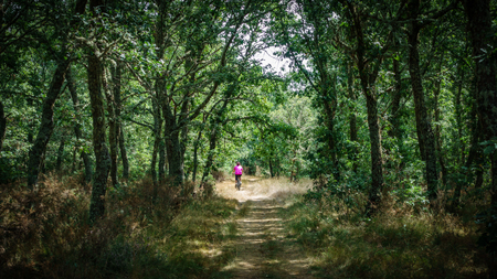 Riding bike over oak tree forest track, high contrast Stock Photo