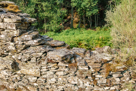 Old abandoned stone wall and fern Stok Fotoğraf