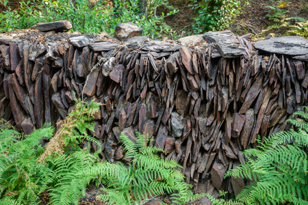 Slate wall with ferns Stock Photo