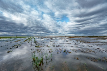 The edge of rice field and cloudy sky reflection in Albufera Stock Photo