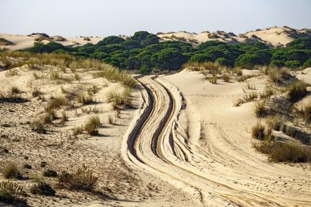 Wheel marks across the sand of the desert