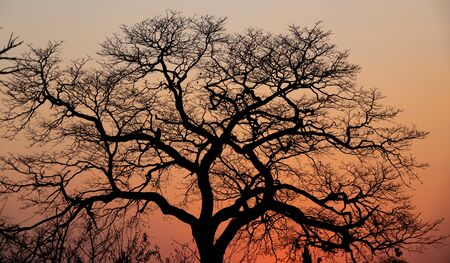 African dusk with orange sky and tree