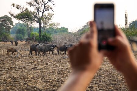 Tourist takes photos with mobile phone at game drive 写真素材