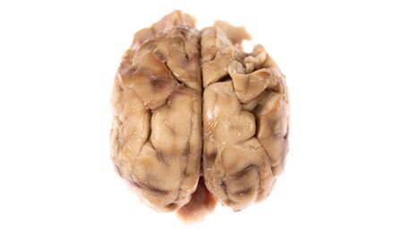 Top view of brain over white background Imagens