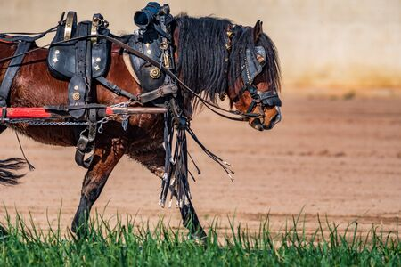 Work horse profile leading a cart over onion field Imagens