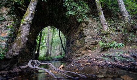 Stream and roots under antique stone bridge