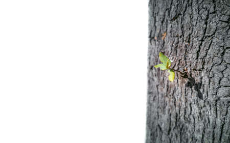 Plant growing from tree trunk over white background Stock Photo