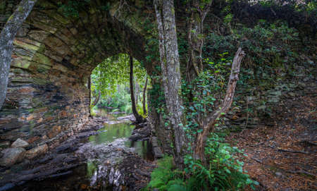Lost stone bridge covered by the forest and stream