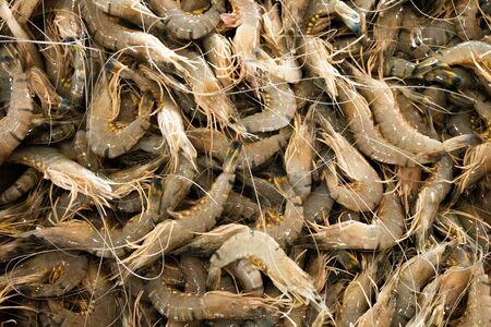 raw jumbo prawns in the market closeup