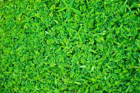 Green grass home outdoor field background, very high color