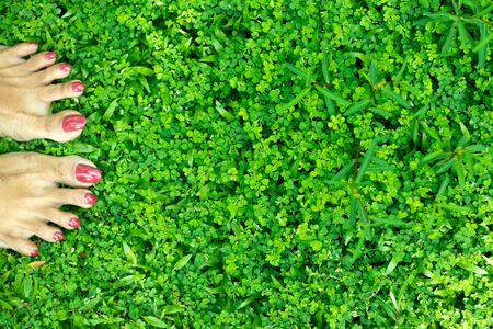 Woman Feet Walking on Fresh Green Grass and red nails 写真素材
