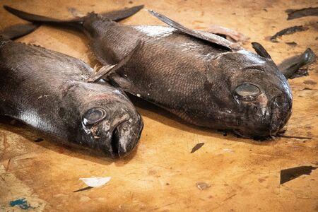 big raw fish on table in fish market closeup 写真素材
