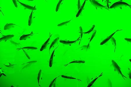 Top view of fish, khao-sok Thailand.