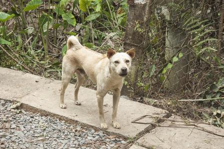 perro furioso: Un perro enojado salvaje, en una calle, en la selva