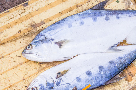 tunny: A few fresh tuna fishes, at a market in Phu quoc, Vietnam Stock Photo