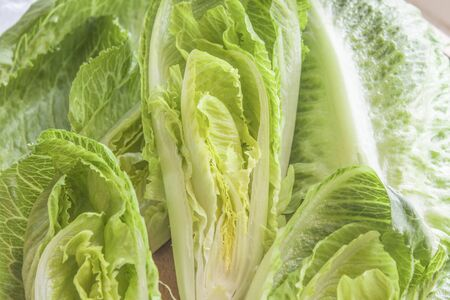 lettuces: A pile of green,tasty, romaine lettuces Stock Photo