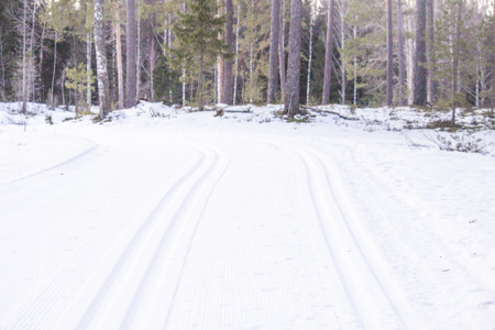 ski traces: Two ski routes, in the cold forrest