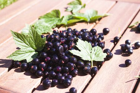 ribes: A pile of tasty black currant and green ribes nigrum leaves