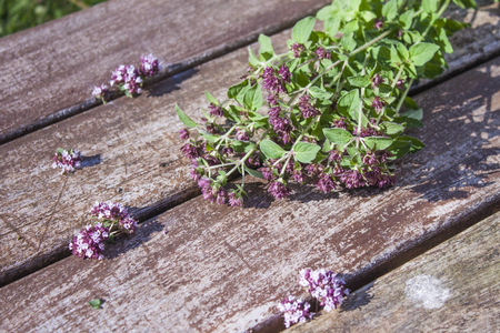 origanum: Origanum vulgare, Oregano flowers, on wooden background