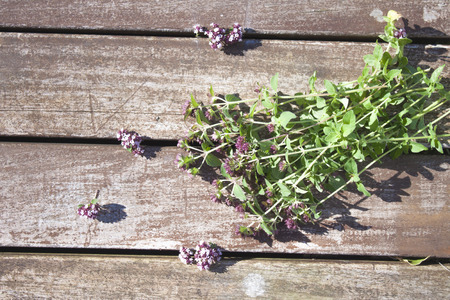 vulgare: Origanum vulgare oregano herbs and flowers, on wooden background Stock Photo